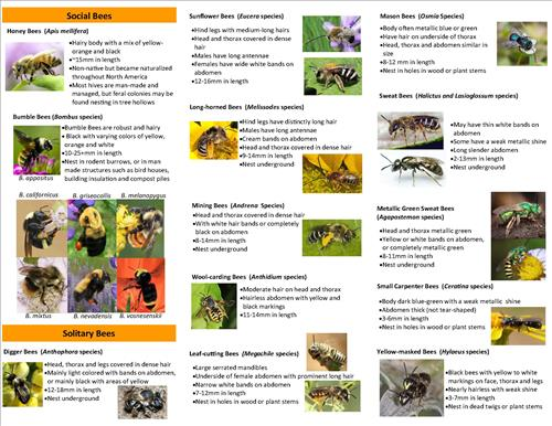 rao may 2016 edited pasture tri-fold bee guide